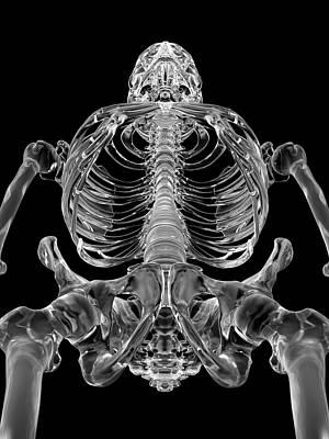 Human Skeletal System Poster by Sciepro
