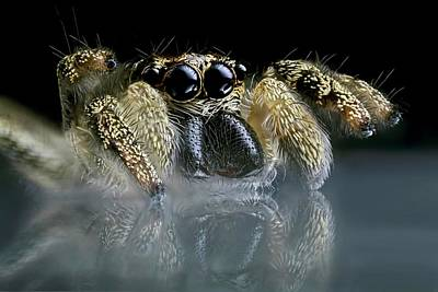 Jumping Spider Poster by Frank Fox