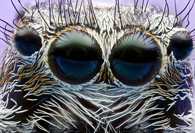 Jumping Spider Head Poster by Nicolas Reusens