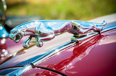 Leaping Jaguar Poster by Sebastian Musial