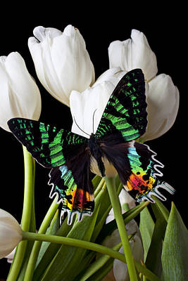 Madagascar Butterfly Poster by Garry Gay