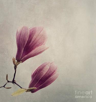 Magnolia Poster by Jelena Jovanovic