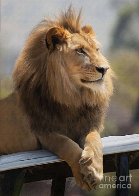 Majestic Lion Poster by Sharon Foster