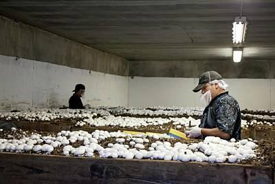 Mushroom Farm Poster by Jim West