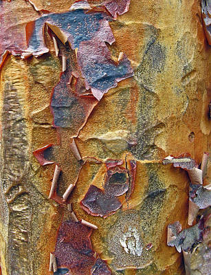Tree Bark Poster featuring the photograph Paperbark Maple   by Jessica Jenney