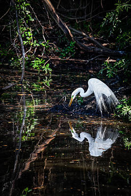 Pause For Reflection Poster by Rob Travis