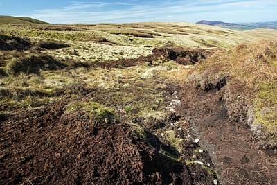 Peat Hags On King Bank Head Poster by Ashley Cooper