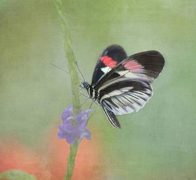 Piano Key Butterfly Poster by Kim Hojnacki