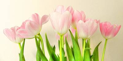 Pink Tulips Poster by Sharon Lisa Clarke