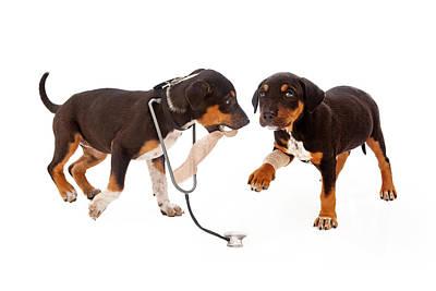 Puppy Veterinarian And Patient Poster by Susan Schmitz