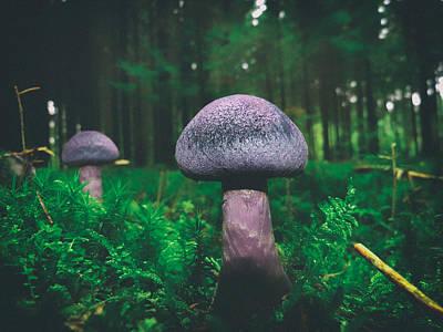 Purple Beauty Poster by Mountain Dreams
