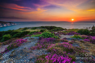 Purple Heather Sunset Poster by English Landscapes