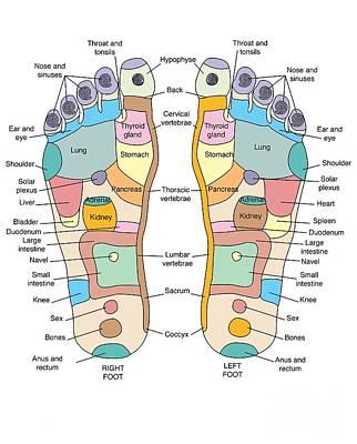 Reflexology Foot Map, Artwork Poster by Peter Gardiner