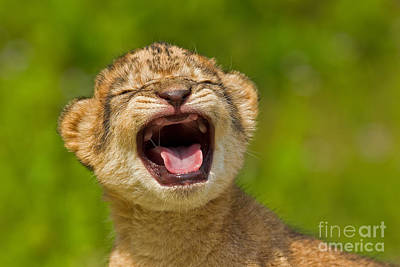 Roaring Practice Poster by Ashley Vincent
