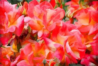 Rose 303 Poster by Pamela Cooper