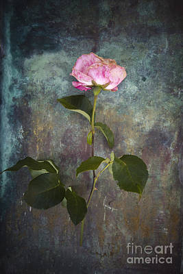 Rose Poster by Maria Heyens