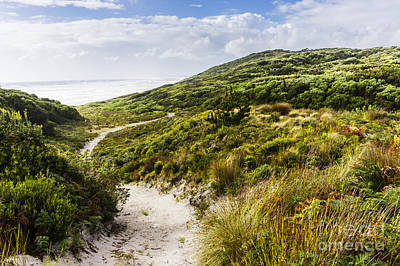 Sand Dune Path Leading To Tasmania Beach Landscape Poster by Jorgo Photography - Wall Art Gallery
