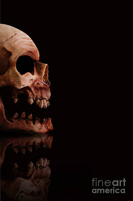 Scary Skull Poster by Jorgo Photography - Wall Art Gallery