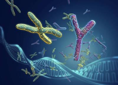 Sex Chromosomes Poster by Harvinder Singh