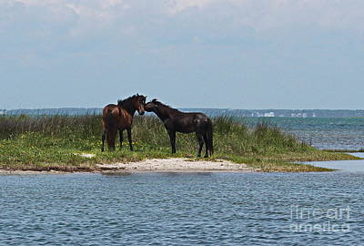Shackleford Ponies 4 Poster by Cathy Lindsey