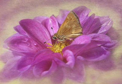 Skipper On Dahlia Poster by Angie Vogel