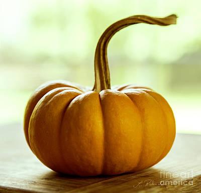 Small Orange Pumpkin Poster by Iris Richardson
