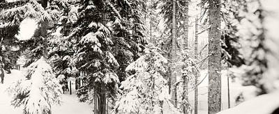 Snow Covered Evergreen Trees At Stevens Poster by Panoramic Images