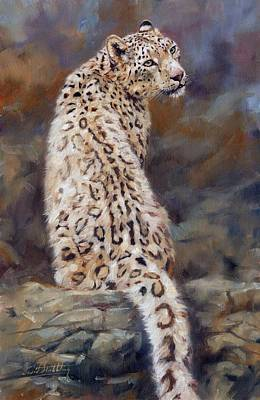 Snow Leopard Poster by David Stribbling