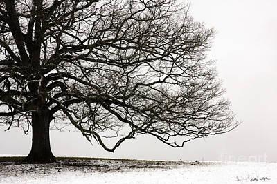 Snow Tree 2010 Poster by Matthew Turlington