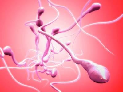 Sperm Cells Poster by Tim Vernon