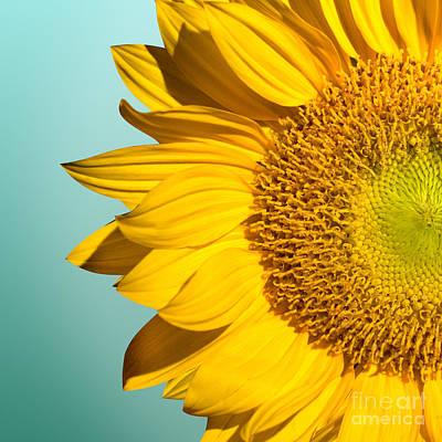 Sunflower Poster by Mark Ashkenazi