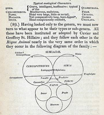 Swainson's Quinary Taxonomy Poster by Paul D Stewart