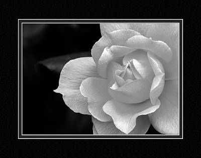 The Exquisiteness Of A Rose  Poster by Charles Feagans