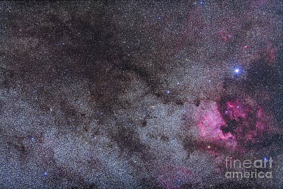 The North America Nebula And Dark Poster by Alan Dyer