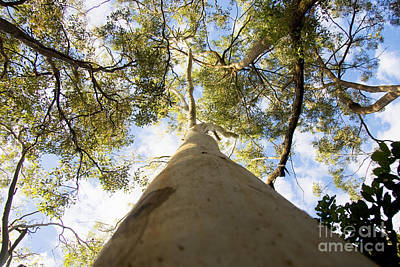 Towering Tree Trunk Poster by Jorgo Photography - Wall Art Gallery