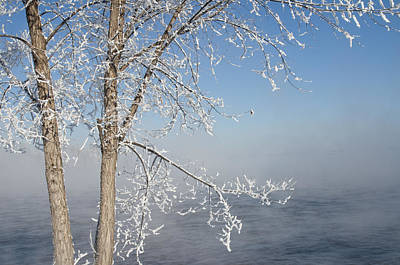 Tree By The River Covered With Hoar Frost. Poster by Rob Huntley