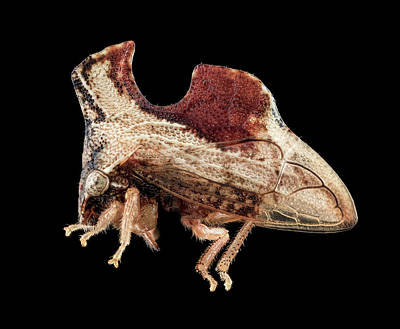 Treehopper Poster by Us Geological Survey