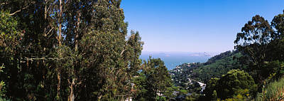 Trees On A Hill, Sausalito, San Poster by Panoramic Images
