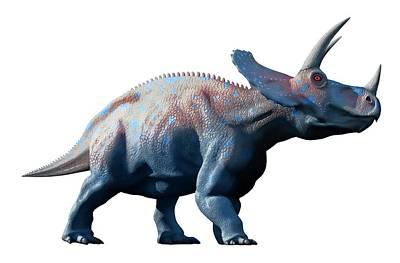 Triceratops Dinosaur Poster by Mark Garlick
