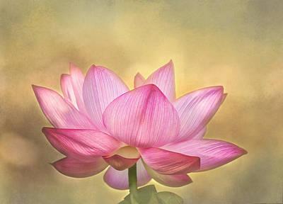 Tropical Lotus Flower Poster by Kim Hojnacki