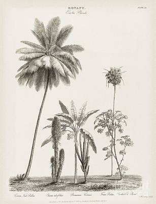 Tropical Plants, 19th Century Poster by Middle Temple Library