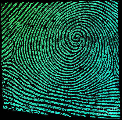 Typical Whorl Pattern 1900 Poster by Science Source