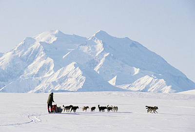Usa, Alaska, Sled Dogs, Park Ranger Poster by Gerry Reynolds