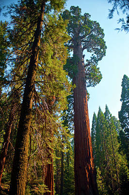 Usa, California, Sequoia, Kings Canyon Poster by Bernard Friel