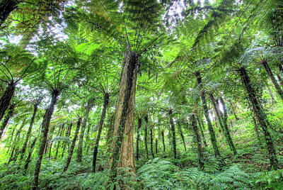 View Of Vegetation In Bali Botanical Poster by Jaynes Gallery