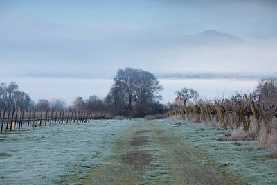Vineyard In Winter During Fog, Ukiah Poster by Panoramic Images
