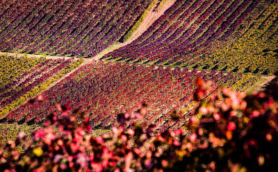 Vineyard Poster by Stefano Termanini