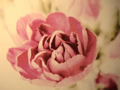 Vintage Pink Poster by Sharon Lisa Clarke