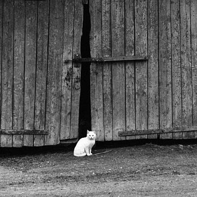 White Cat Standing By A Barn Door  Poster by Nerijus Juras