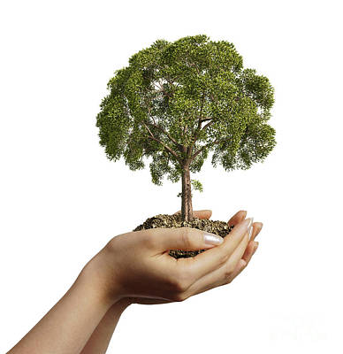 Womans Hands Holding Soil With A Tree Poster by Leonello Calvetti